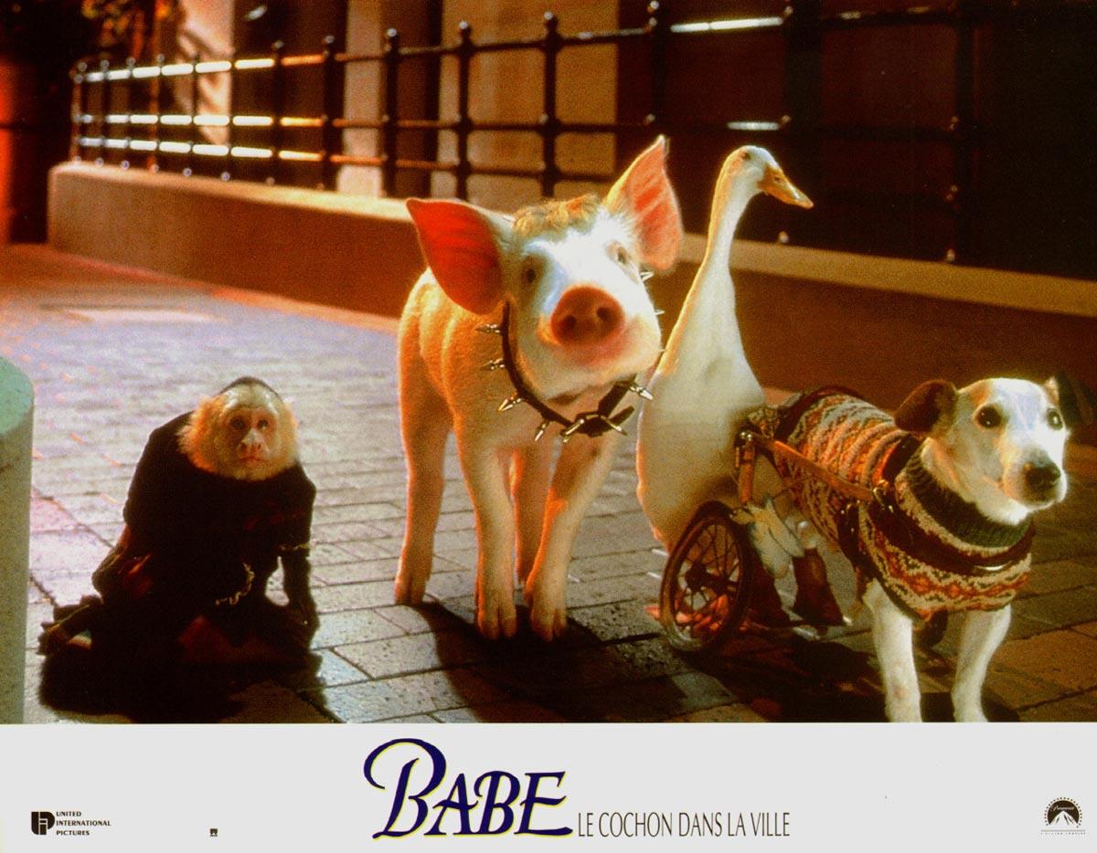 babe-pig-4